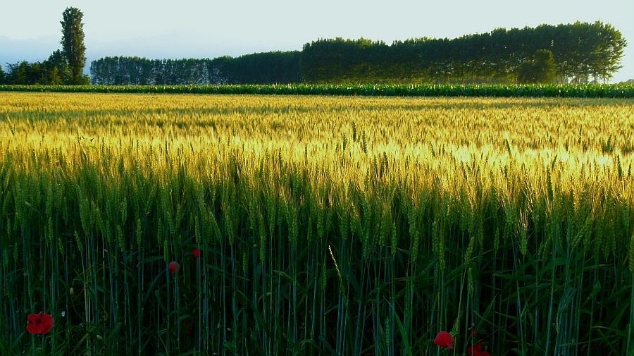 (Foto: Flickr de Campo di grano)