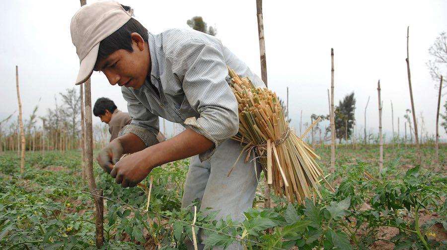 (Foto: Flickr de World Bank).