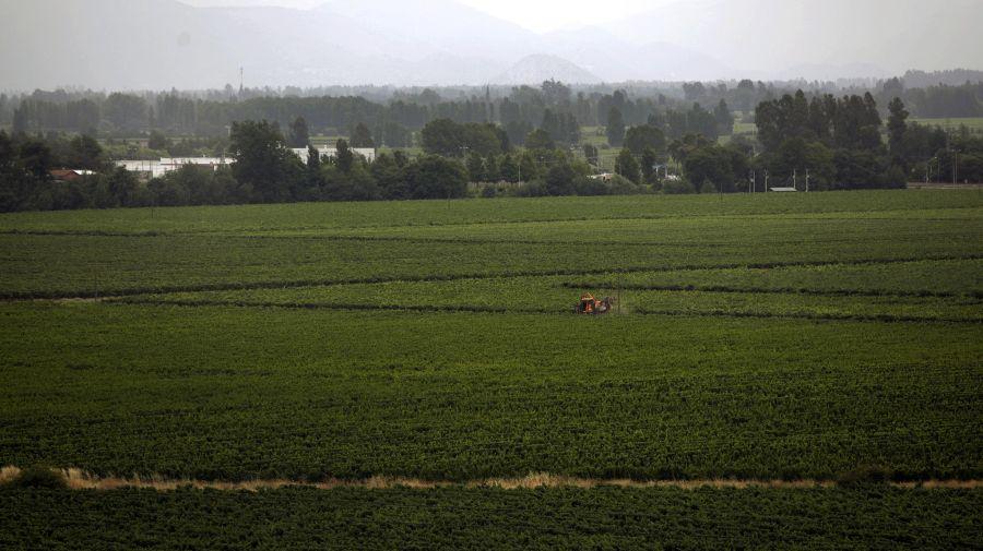 (Foto: Ministerio de Agricultura Chile)