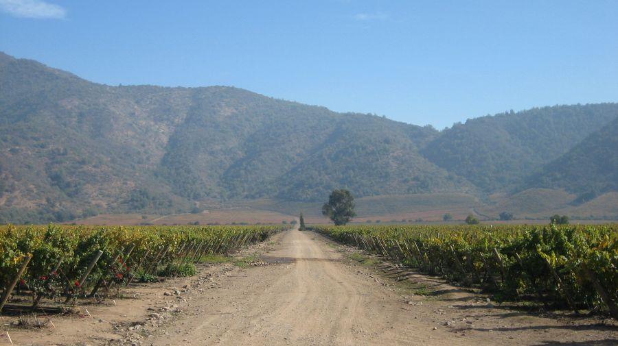 Vina San Pedro, Chile (Foto: Deutsche Welle)