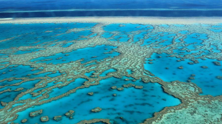 gran_barrera_coral_cambio_climatico_australia_blanqueo